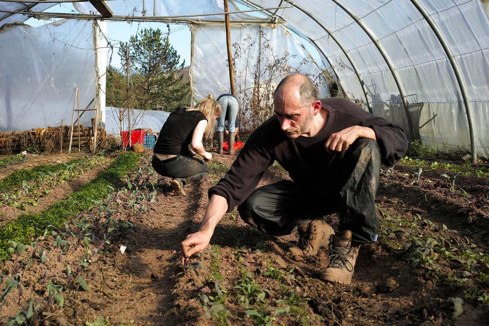 Formation à l'autonomie alimentaire et médicinale